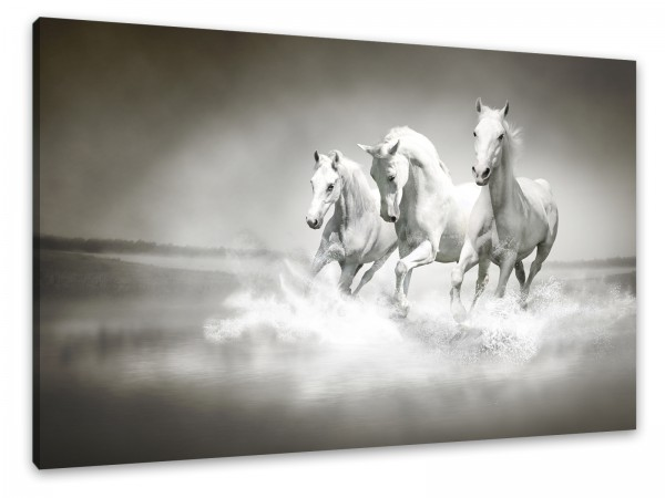"Leinwandbild ""Traum-Pferde"""
